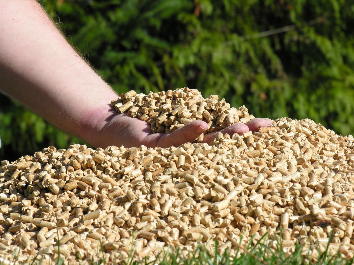 What Are Wood Pellets ~ Biomass pellet machine make wood pellets and